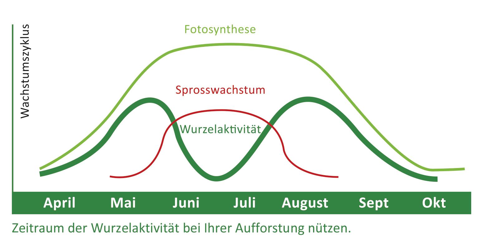 Grafik Spätsommeraufforstung